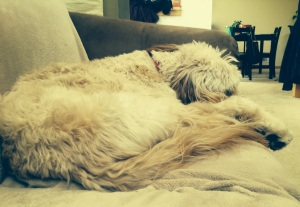 Arie_Sleeping